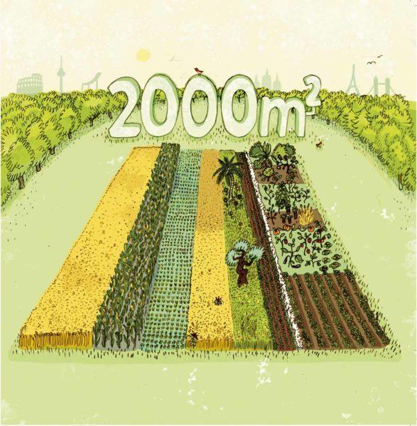 2000m2 Projekt